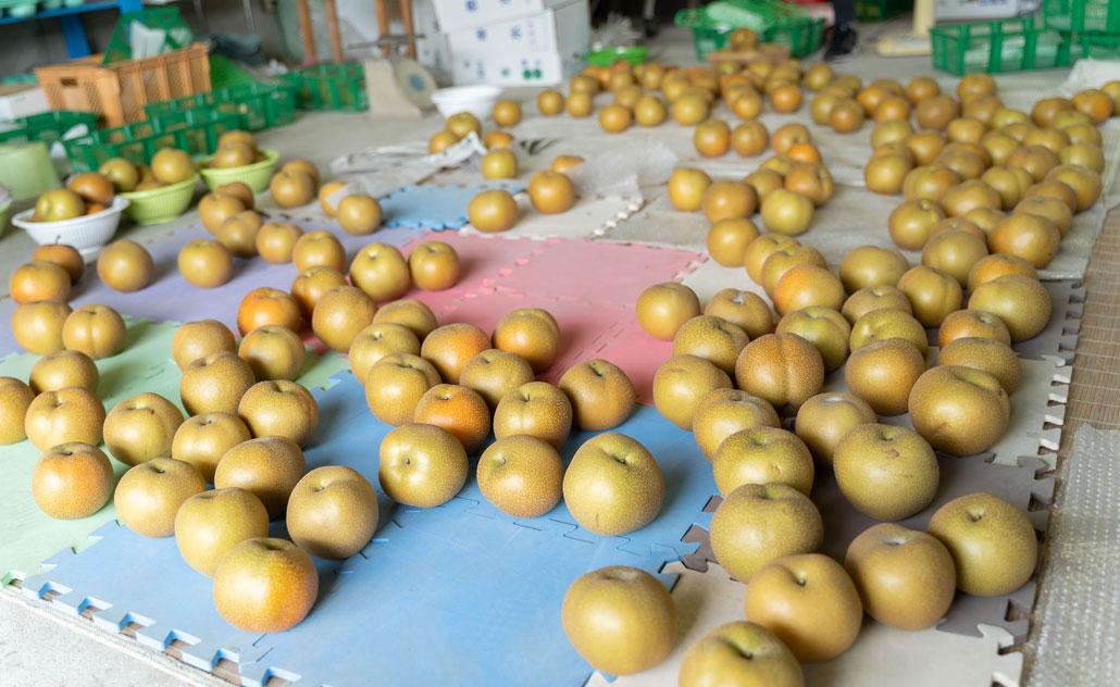 八幡市の梨の画像