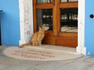 イタリアの猫の画像